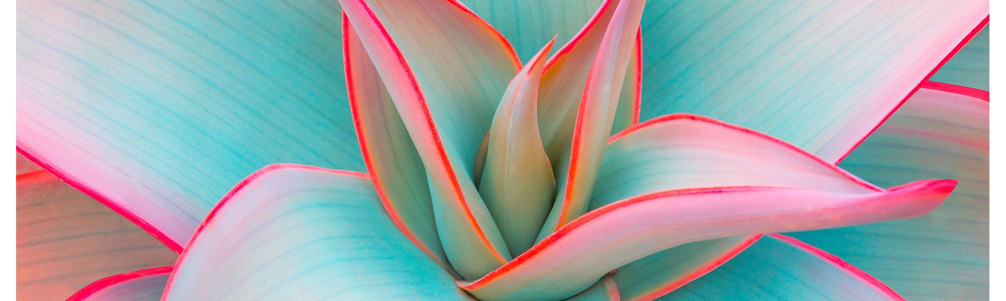Agave leaves pastel