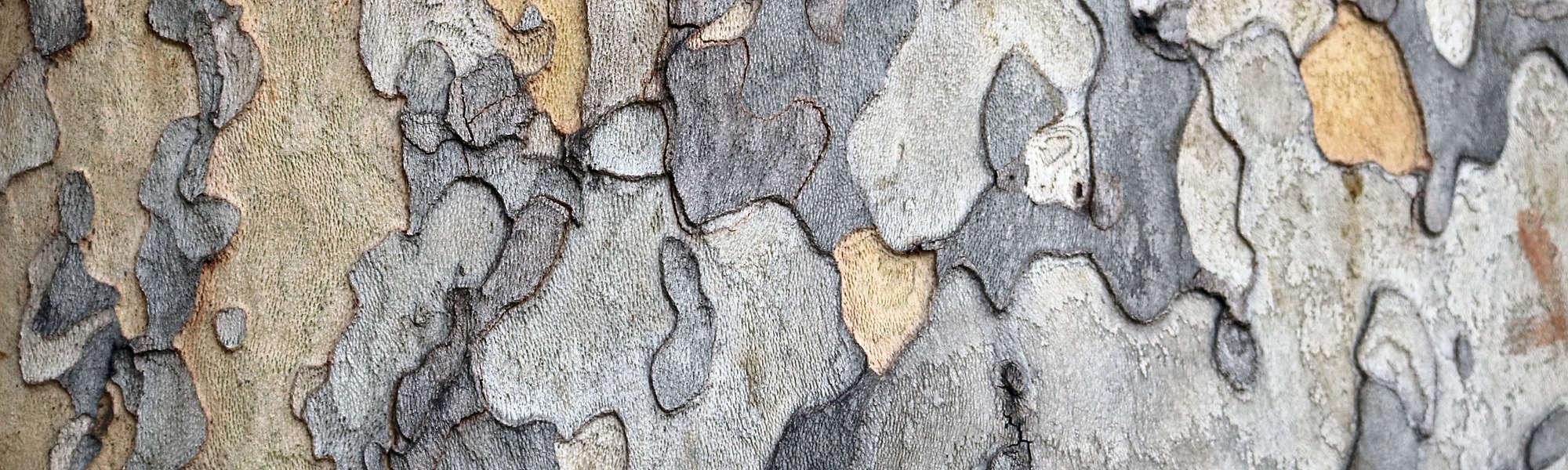 Tree bark trunk autumn