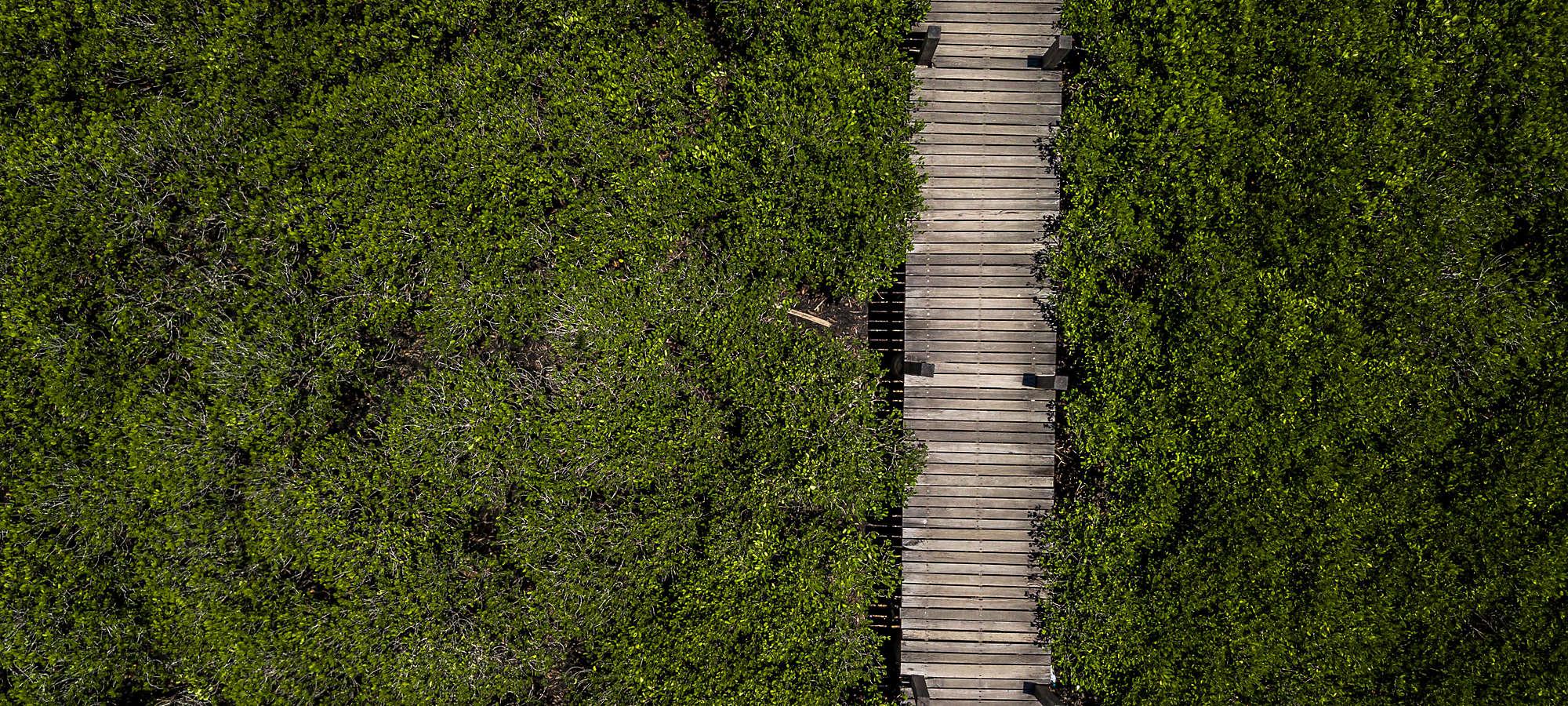 Aerial wooden bridge walkway forest