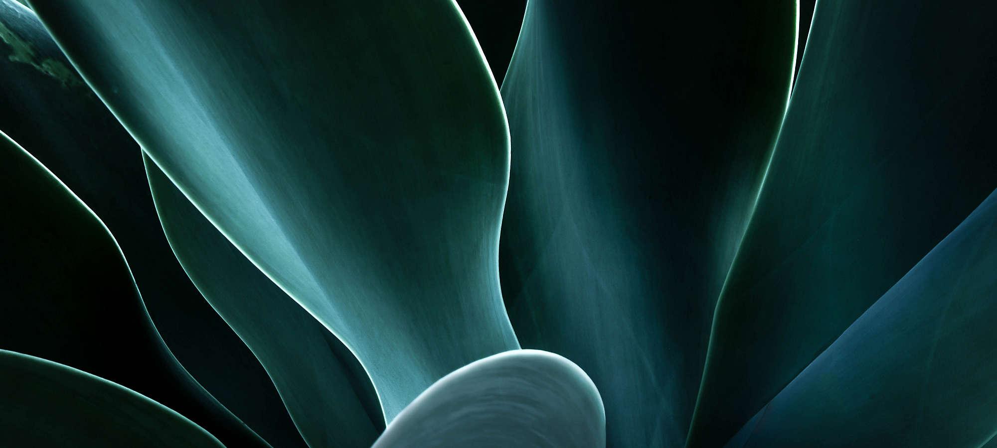 Closeup Agave Plant Banner