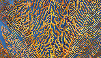 Coral abstract texture yellow