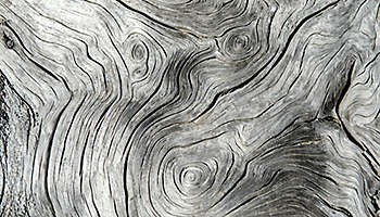 Tree rings and trunk