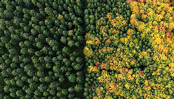 Aerial view green treetops turning color in autumn, Donaueschingen, Baden-Wuerttemberg, Germany