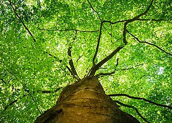 Tree foliage branch green leaf