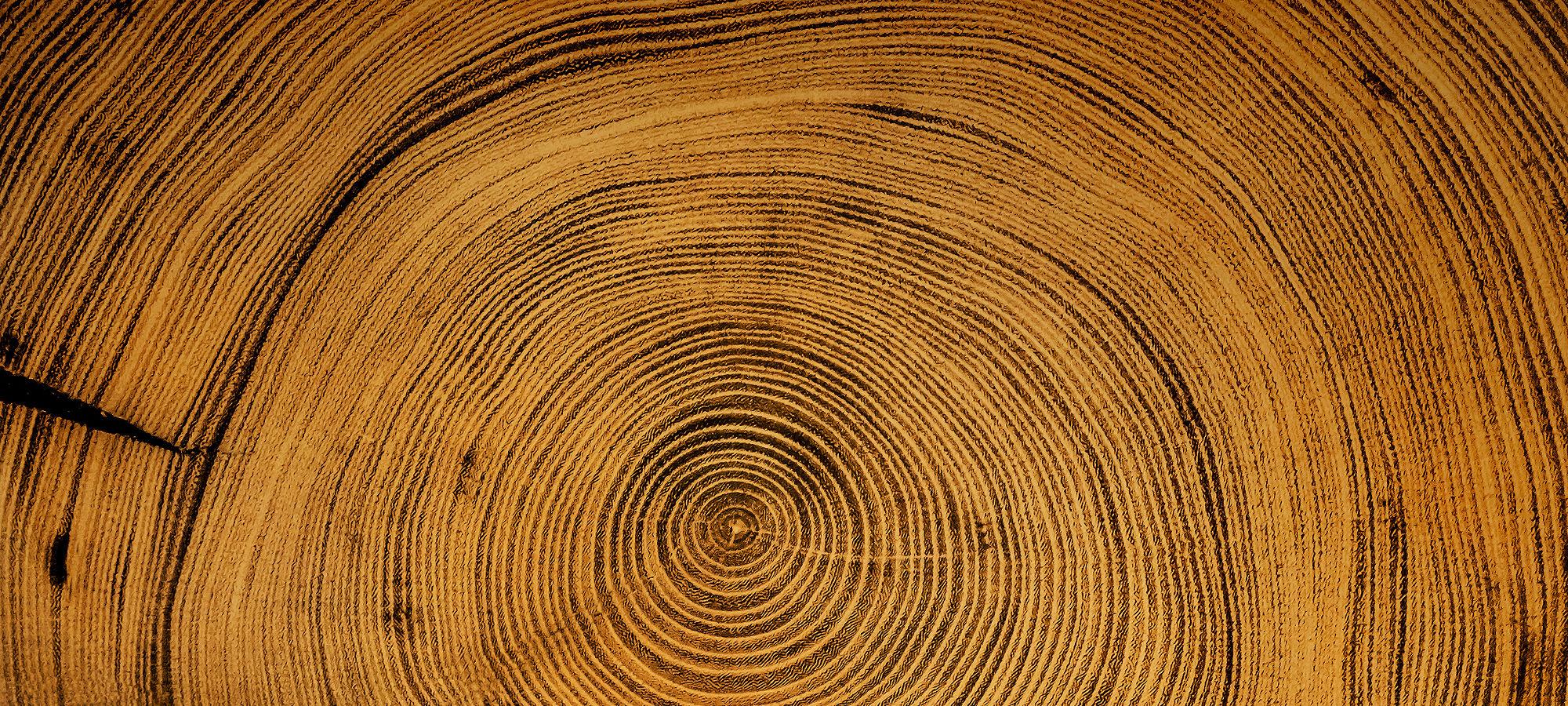 Wooden spiral tree trunk