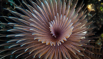 Worm spiral reef Indonesia